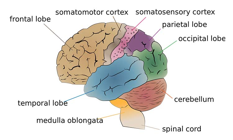 Music and the Brain: Research, Effects, and Benefits All ...